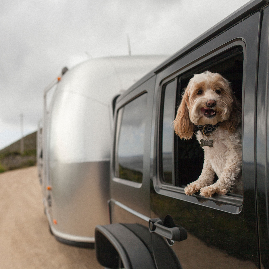 Pet Road Trip | Outdoorsy RV Rentals Marketplace