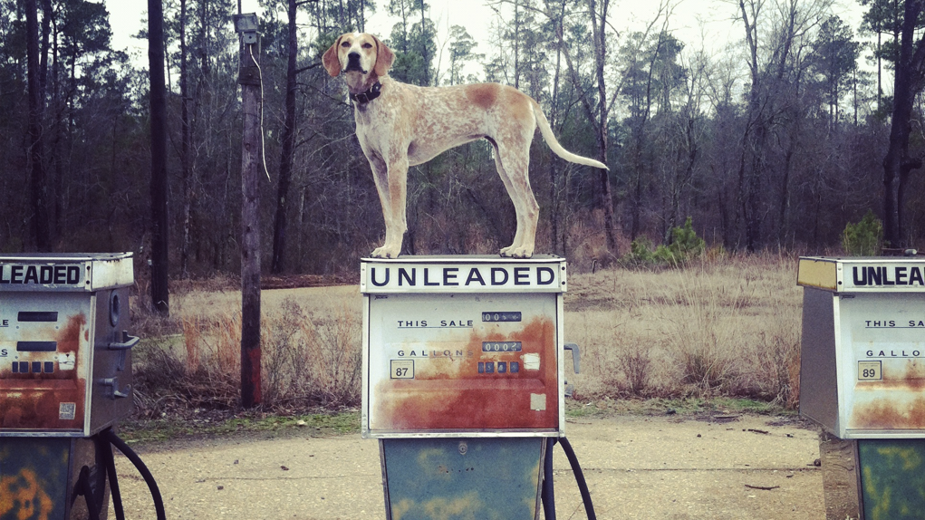 Coonhound Pose | Outdoorsy RV Rentals Marketplace