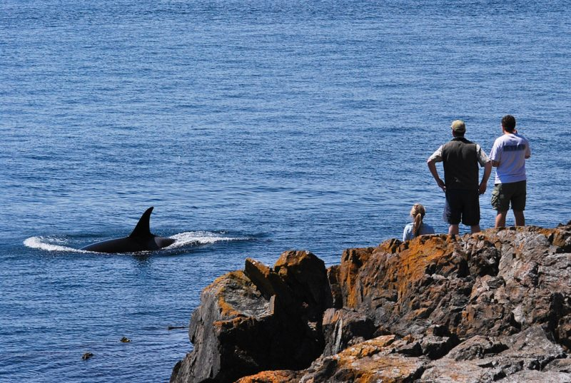 The Best West Coast Spots for Whale-Watching