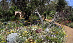 256px-Wildflowers,_Boyce_Thompson_Arboretum