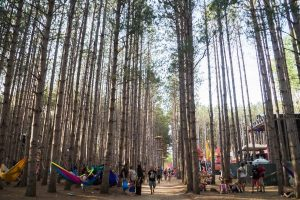 Electric Forest Festival dazzles in Rothbury, MI.