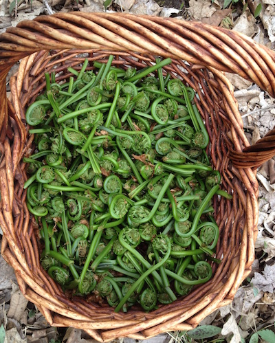 foraging for one pot meal camping