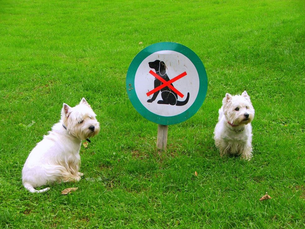 Campground rules for pets