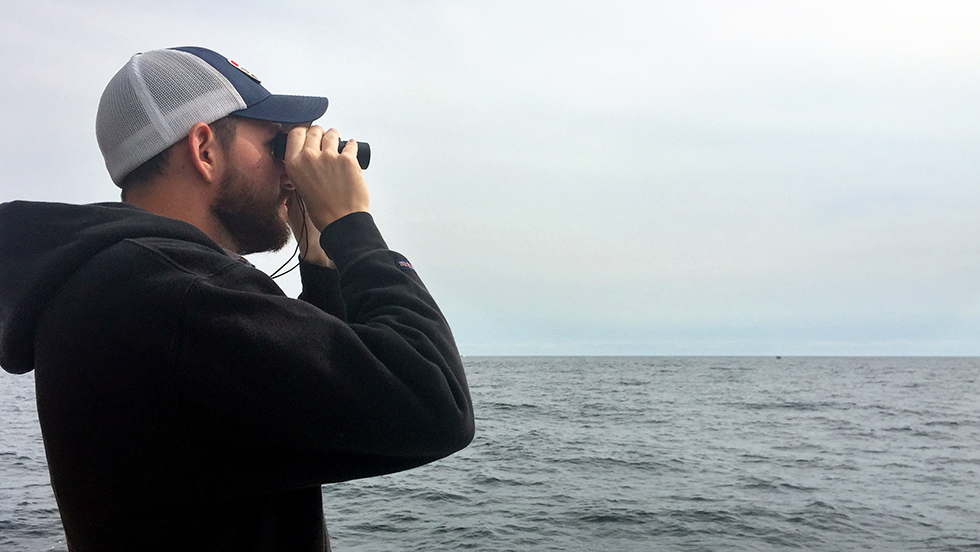 Searching for Whales in Massachsetts