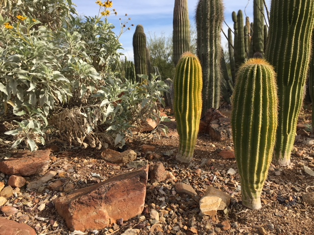 One of the many gardens at the Arizona-Sonora Desert Museum.