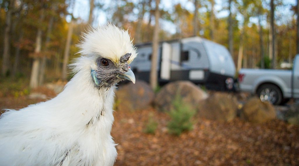 RV Pet Safety when Away | Outdoorsy RV Rental Marketplace