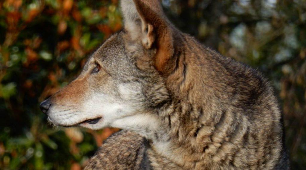 wild animal safety | Outdoorsy RV Rental Marketplace