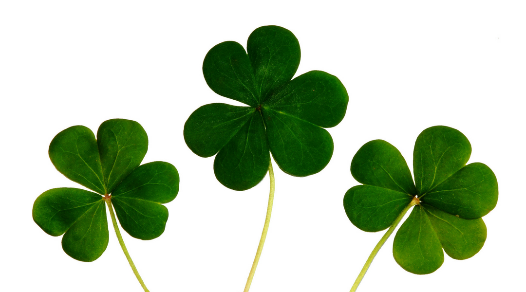 Where to Take an RV this St. Patrick's Day