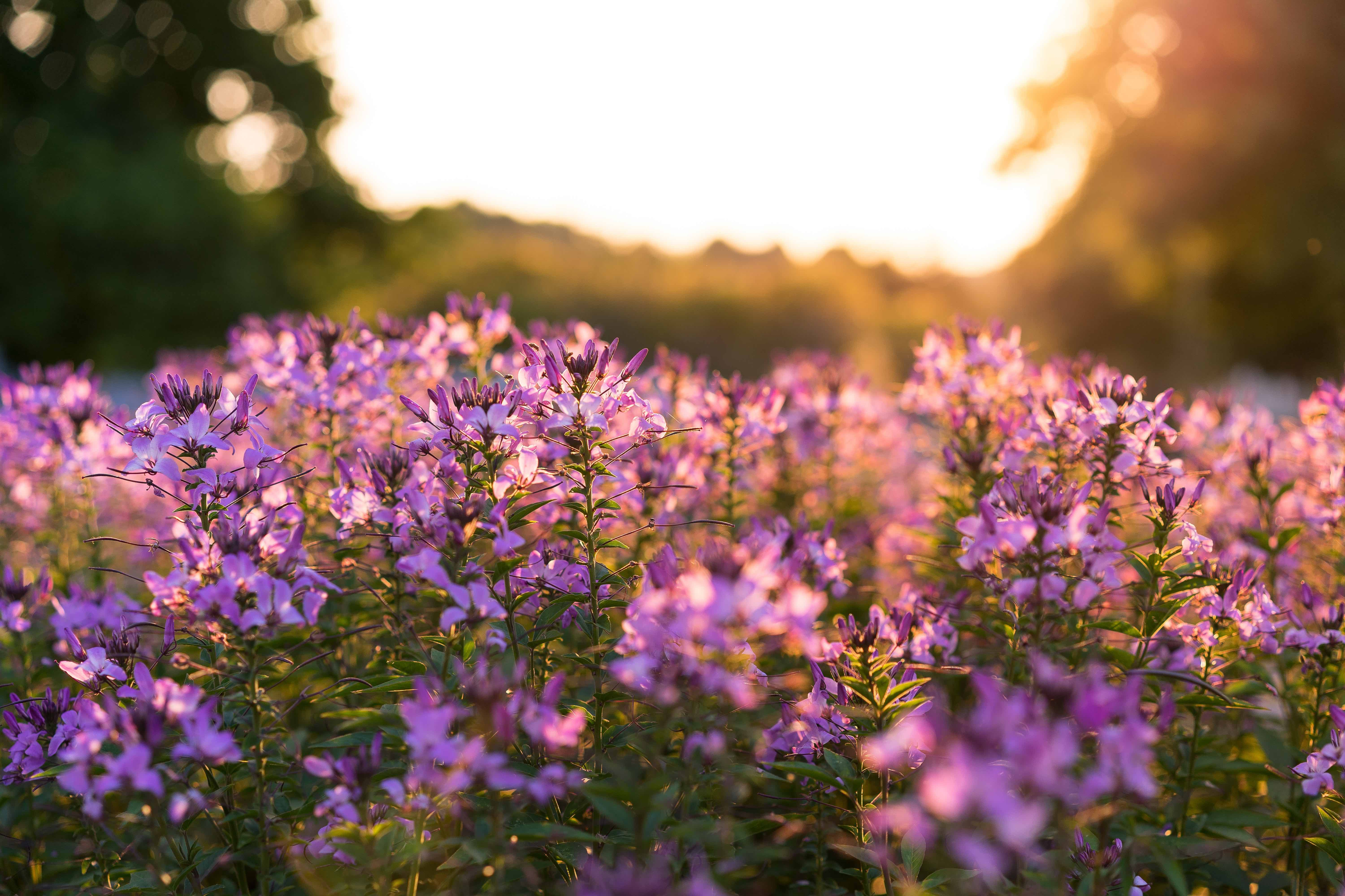 Best Places to See the Spring Bloom