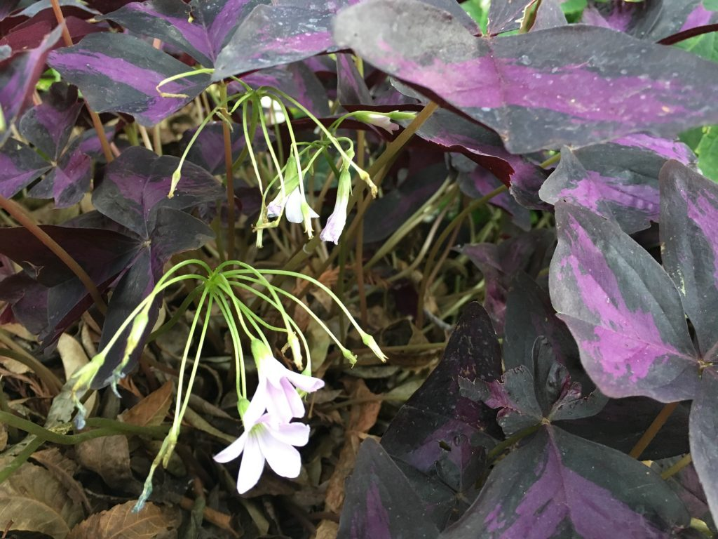 botanic gardens | Outdoorsy RV Rental Marketplace