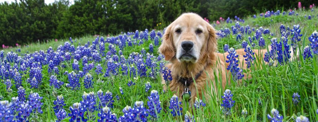 Photo Tripping America - Traveling With Your Pets - Outdoorsy