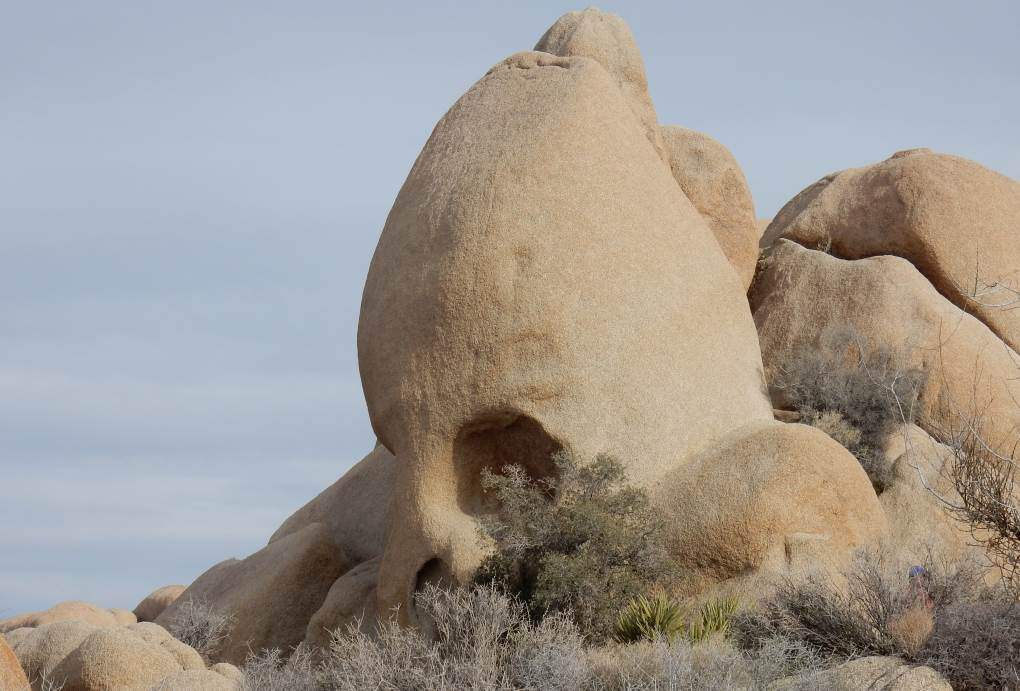 RV Adventures in Joshua Tree National Park / Outdoorsy RV Rental Marketplace
