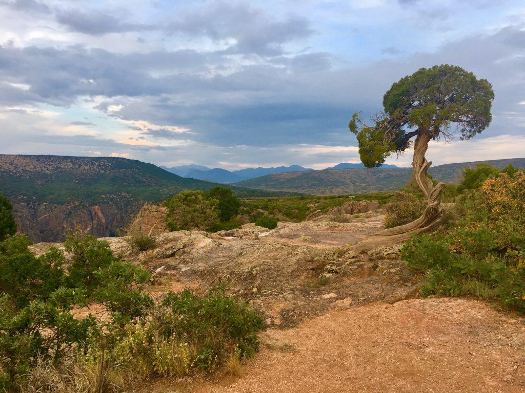 Black Canyon| Never Idle
