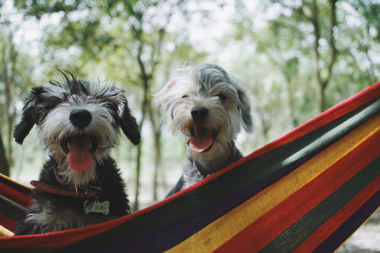 8 Things To Know Before Taking Your Dog Camping