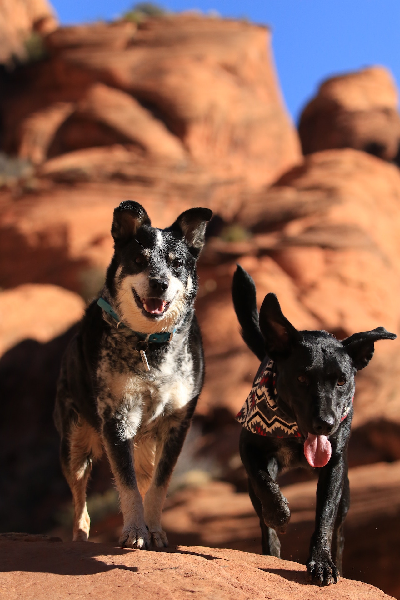 Dogs Camping   Outdoorsy