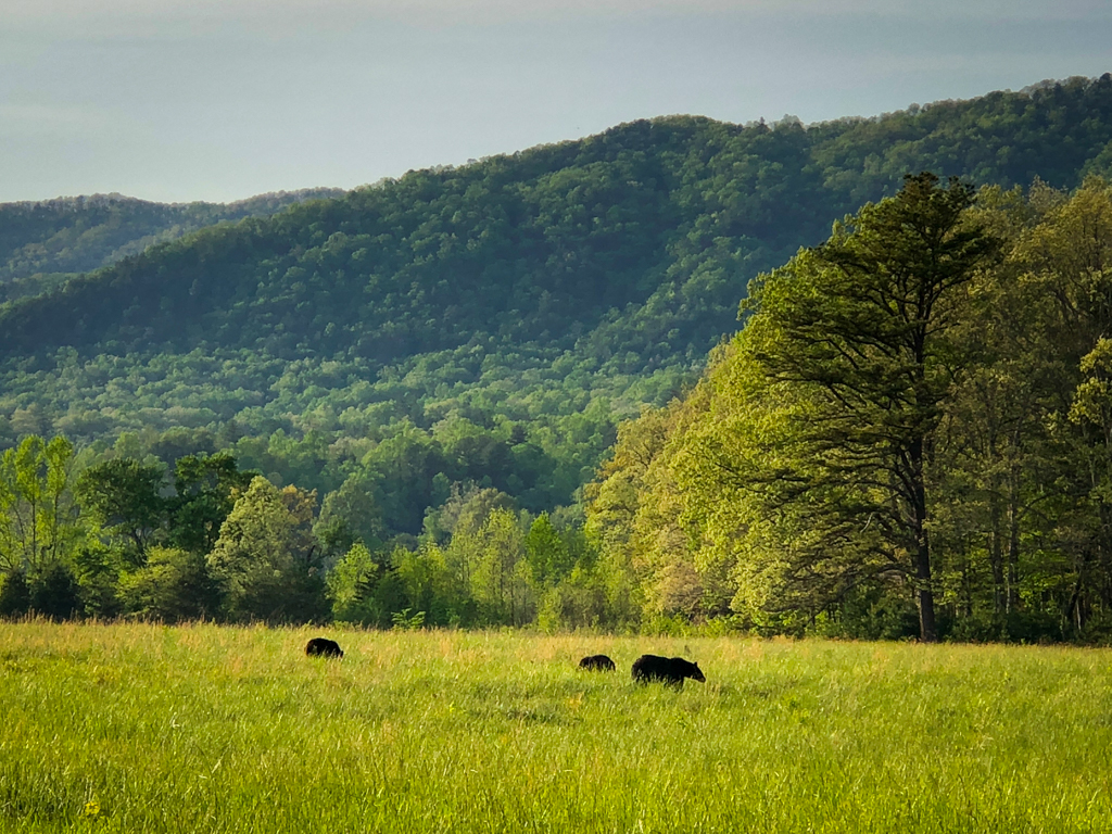 Top 5 National Parks East of the Mississippi