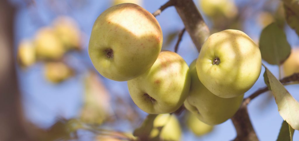 Apple picking | Outdoorsy RV Rental Marketplace