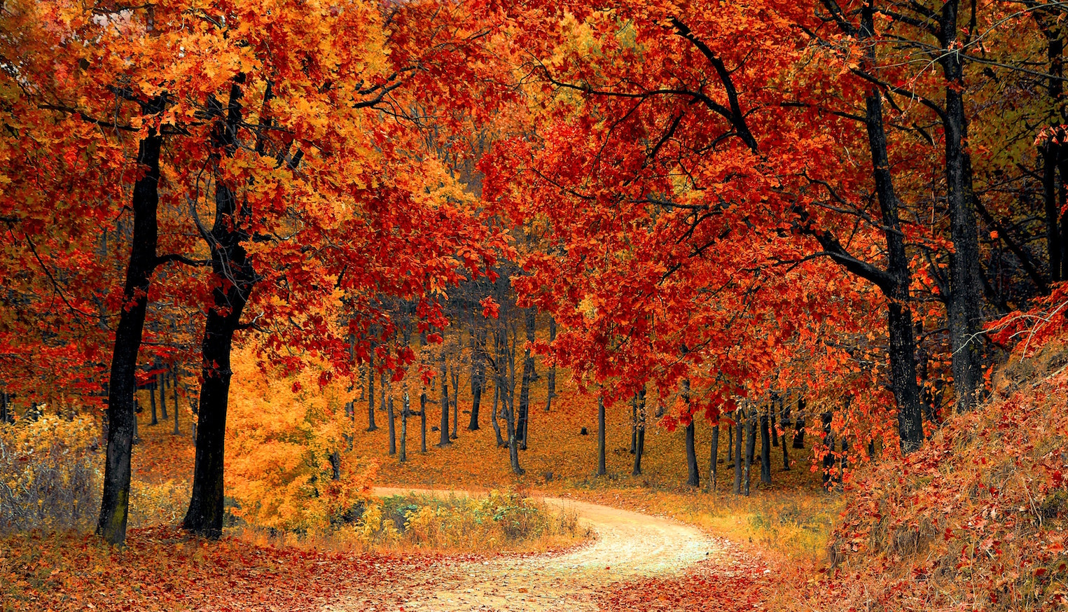 Fall festival colors | Outdoorsy RV Rental Marketplace