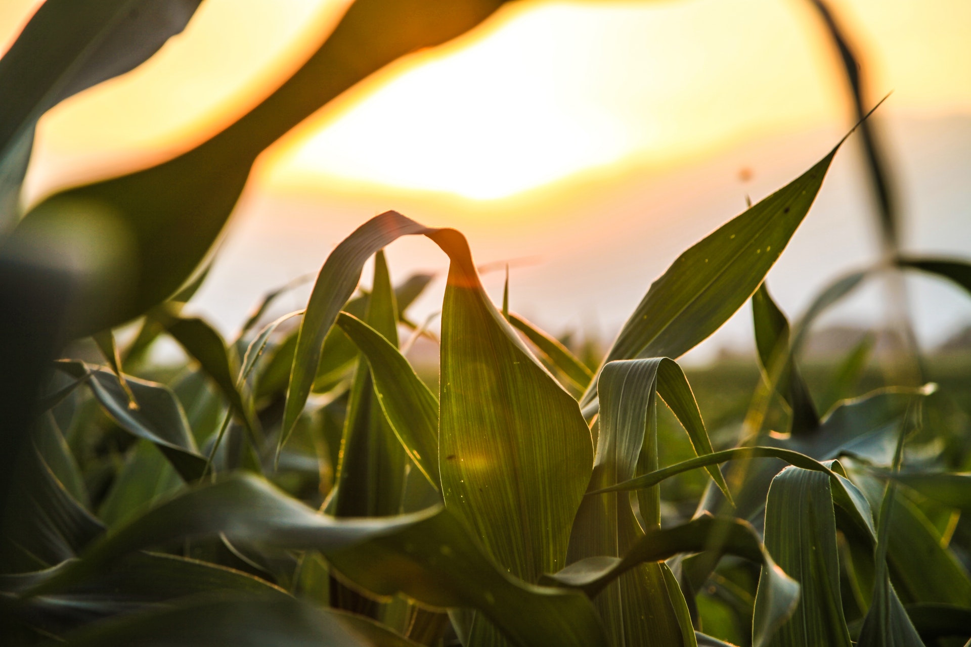 Corn maze | Outdoorsy RV Rental Marketplace