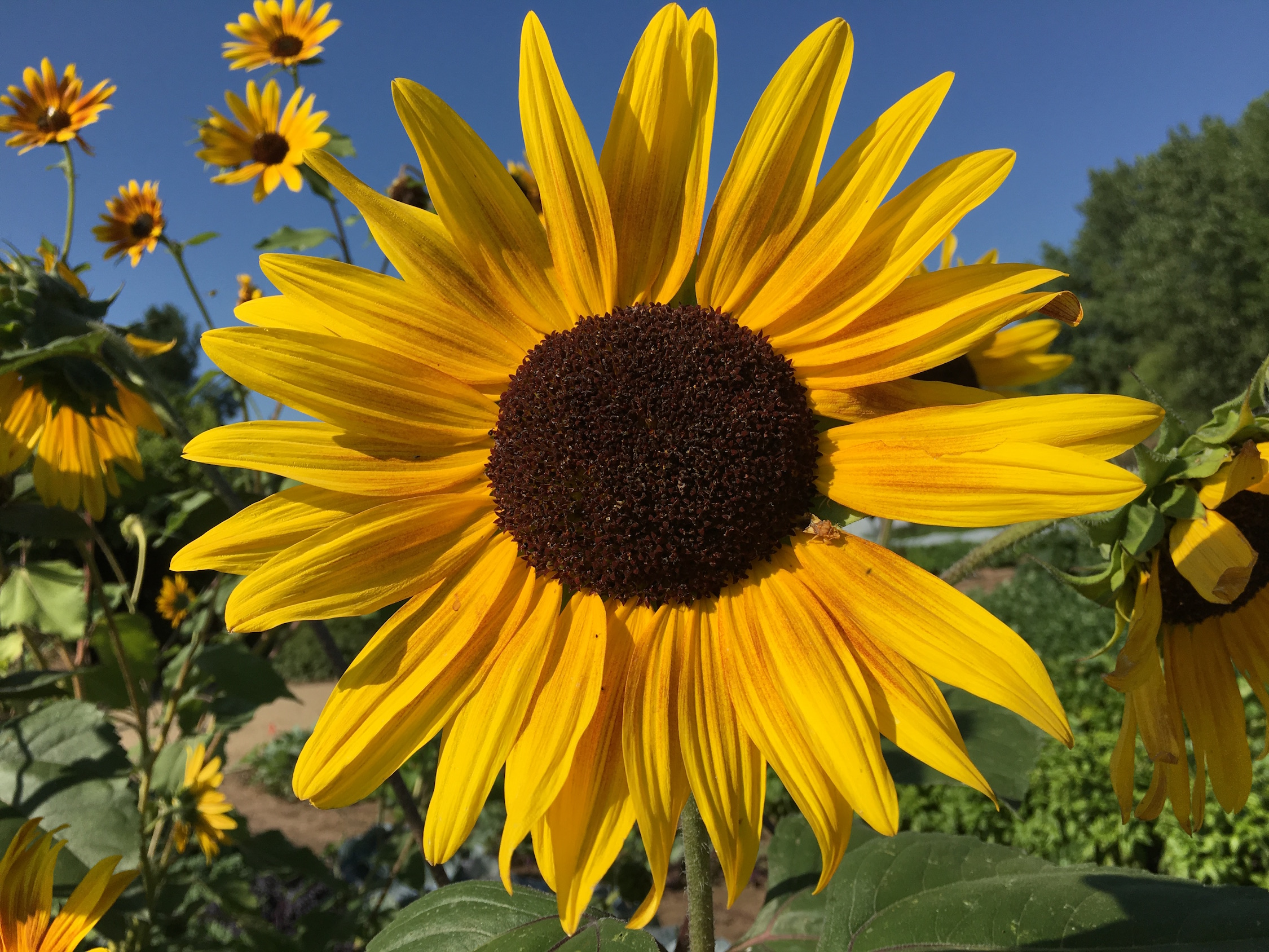 Flowers in Fort Collins, CO I Outdoorsy RV Rental Marketplace
