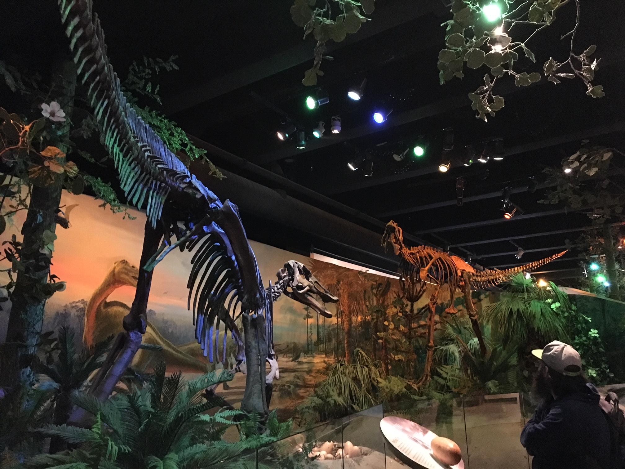 North Carolina Museum of Natural History, Raleigh, NC I Outdoorsy RV Rental Marketplace