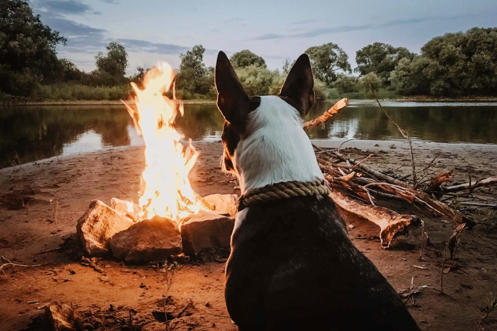 Dog by a campfire I Outdoorsy RV Rental Marketplace