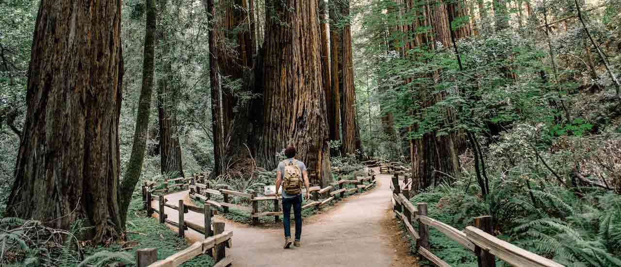 Intro to Forest Bathing & Where to Practice the Art in the U.S.