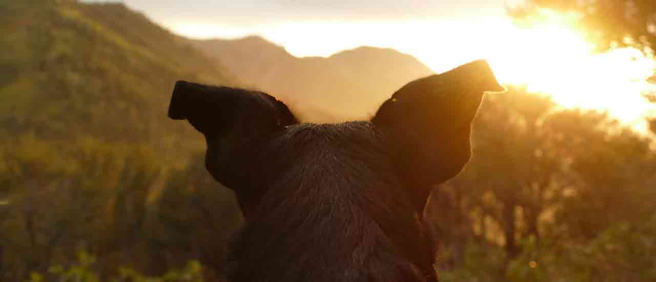 3 Perks Of Camping With Your Dog
