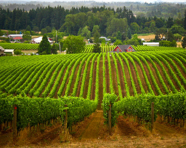 Worth The Trip: 6 U.S. Towns Wine Connoisseurs Will Love