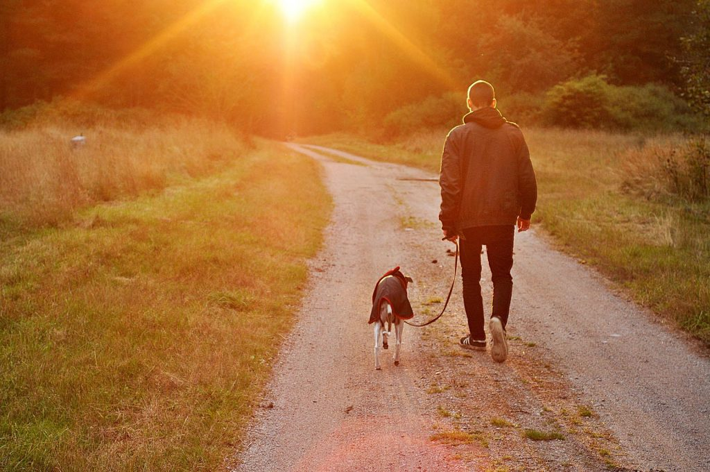 Photo Tripping America - Best RV Parks for Dogs - Outdoorsy