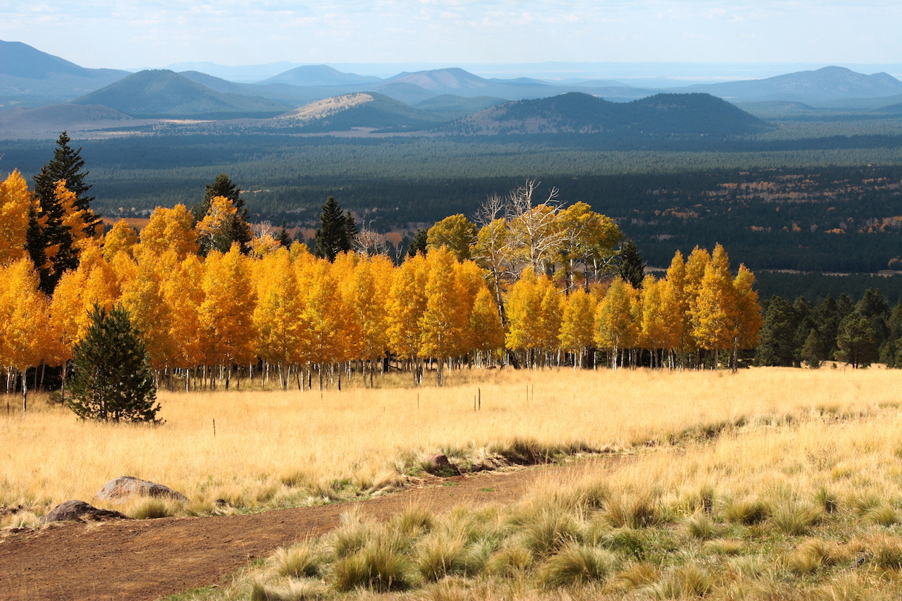 Fall colors outside of Prescott, Arizona.