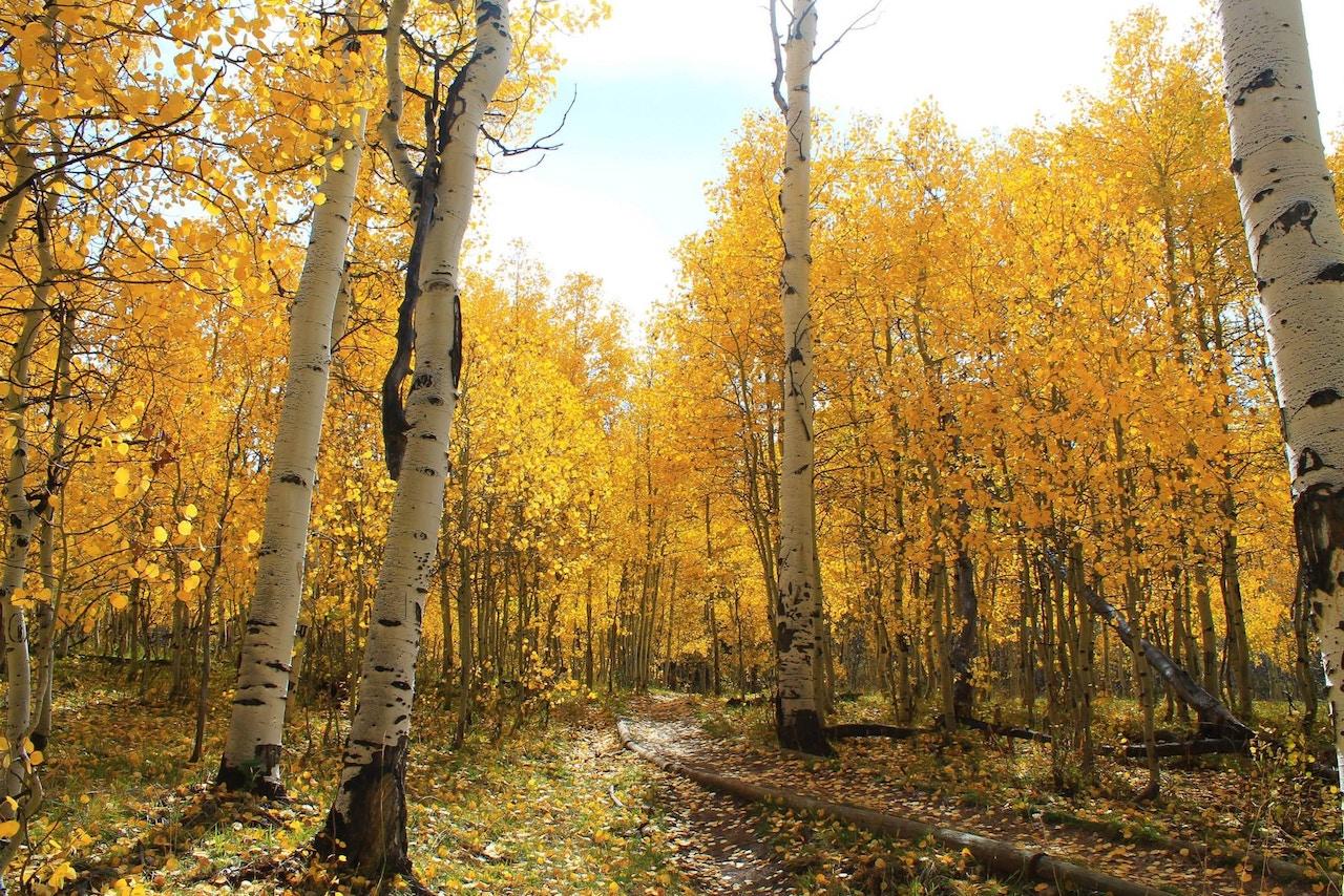 Fall foliage outside of Salt Lake City.