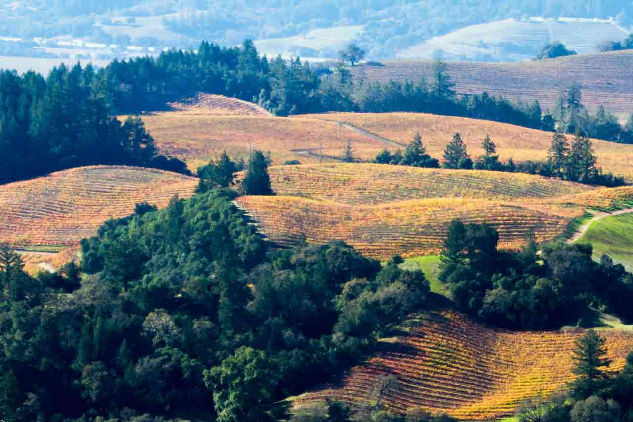 California wine country in the fall.