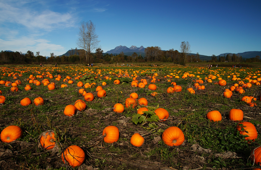 Top 8 Pumpkin Patches and Halloween Fests for RVers