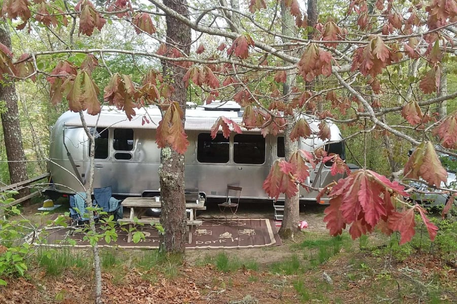 Airstream trailer in a wooded spot