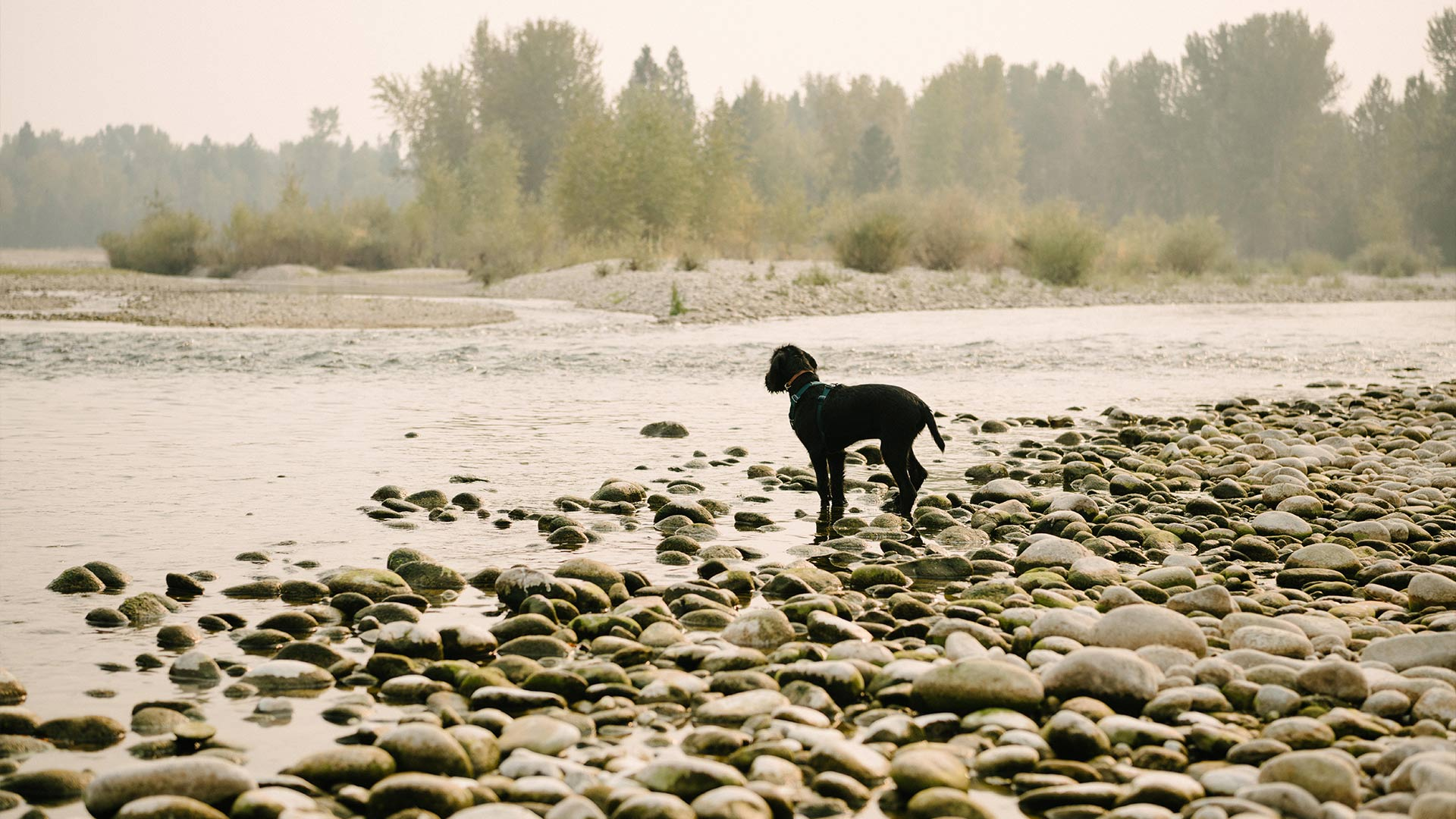 A Guide for Camping With Pets: What You Need To Know