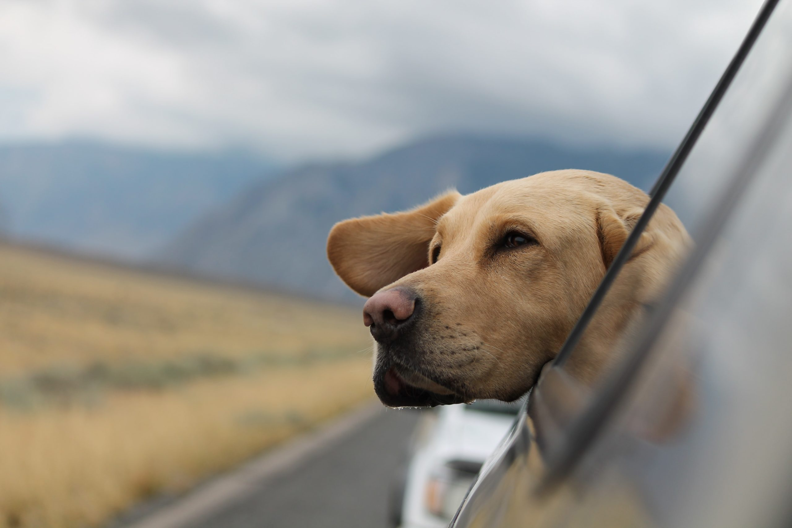 What RV type is best for pet travel?