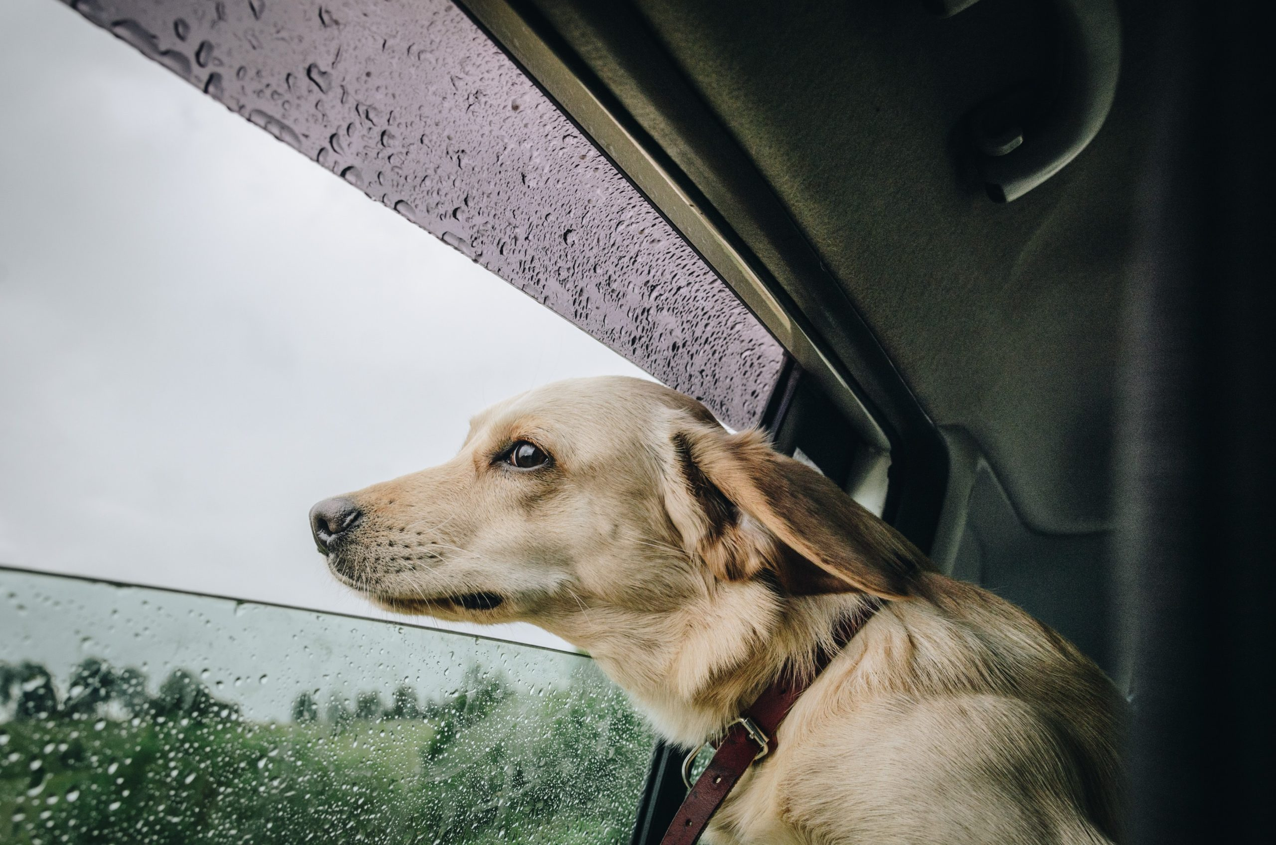 How to travel with a new puppy