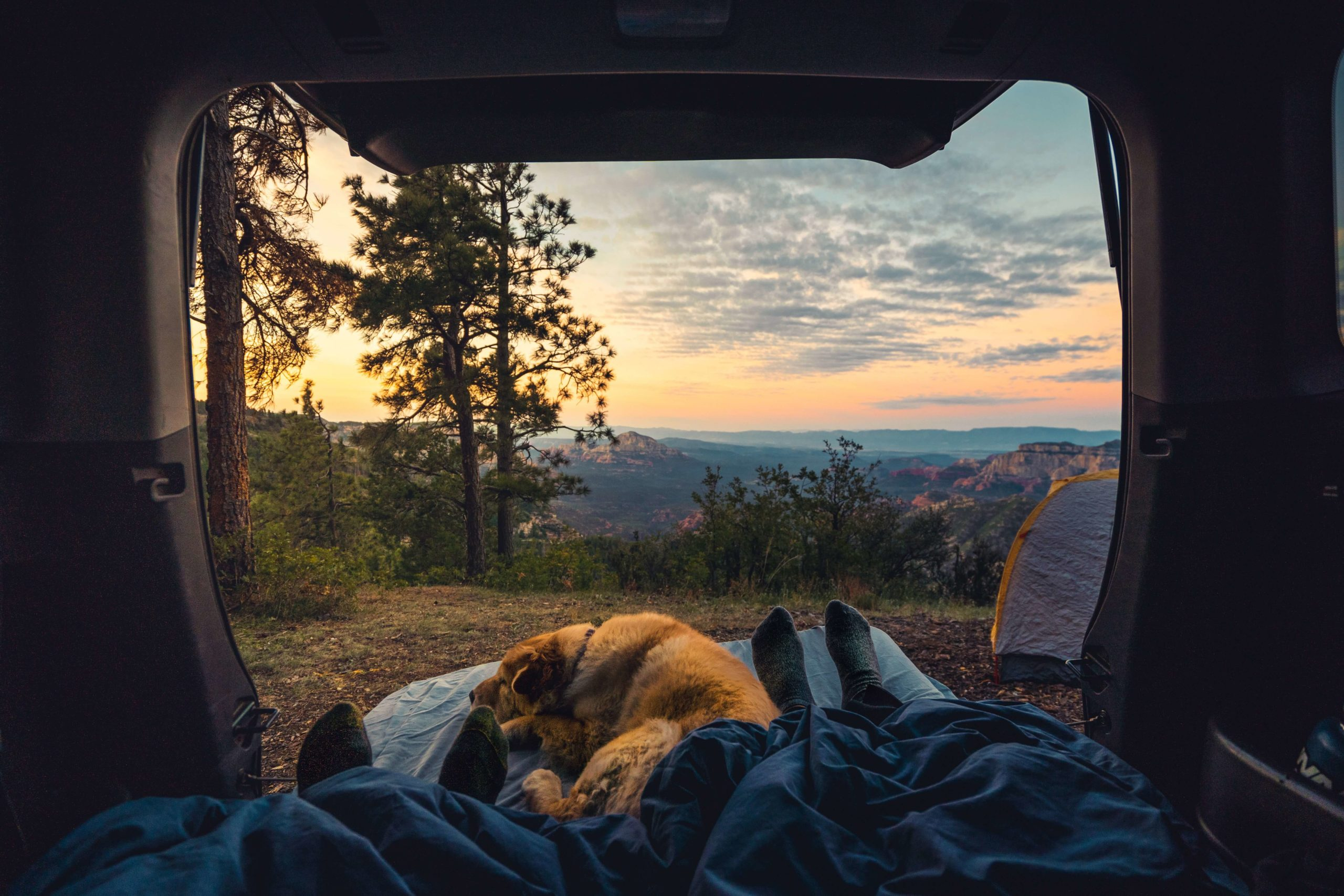 Camping with dogs: Best portable dog fence