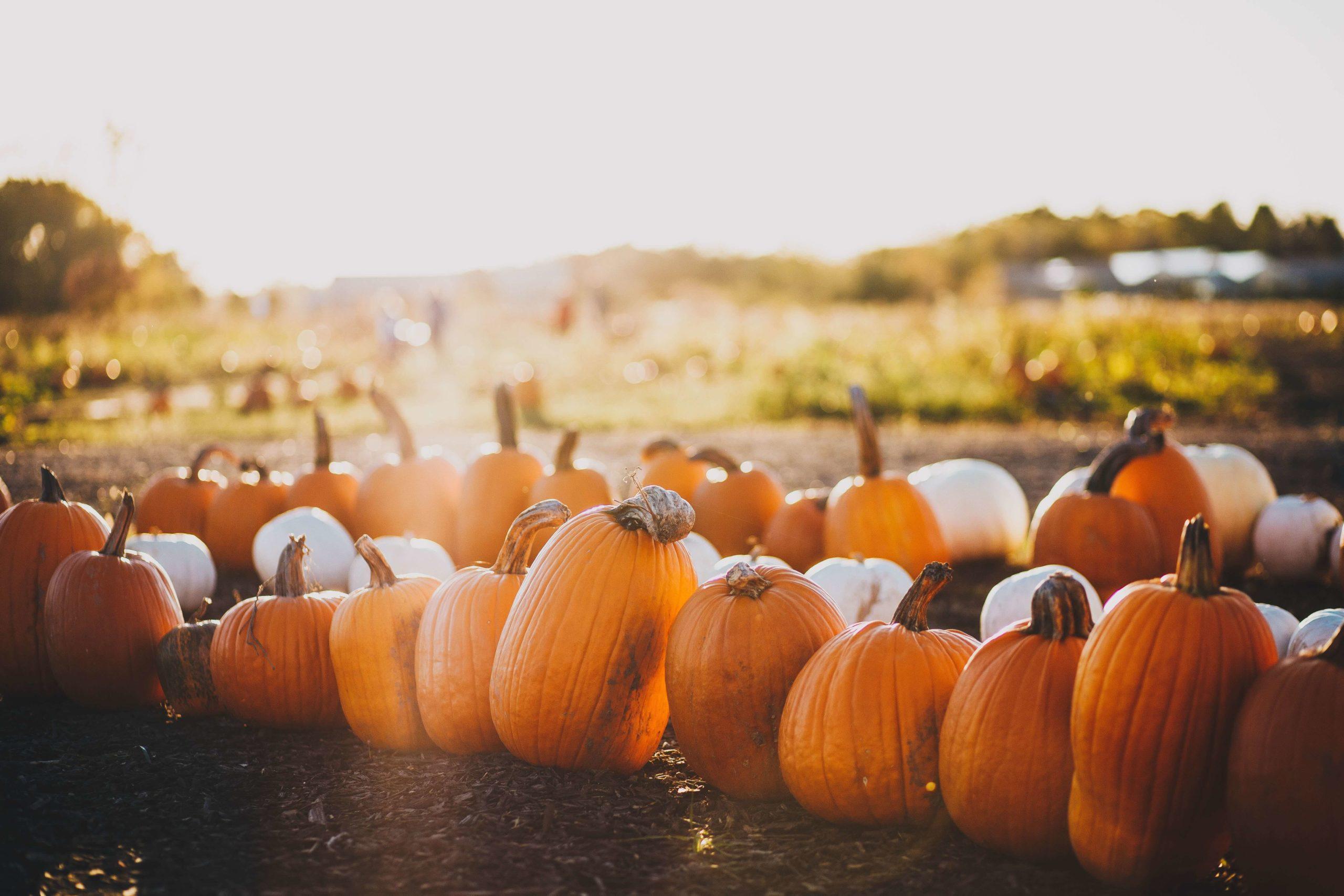 10 pumpkin patches worth planning a trip around